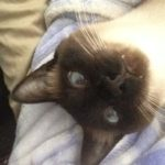 Cat sitter, cat nutrition, cat food, cats