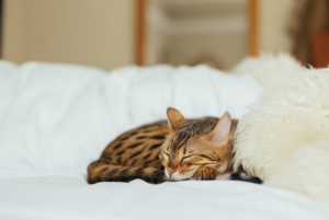 Benefits of Hiring a Professional Cat Sitter | Distinctive Pet Care