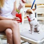 Dog-Friendly Places in the Denver Metro Area | Distinctive Pet Care